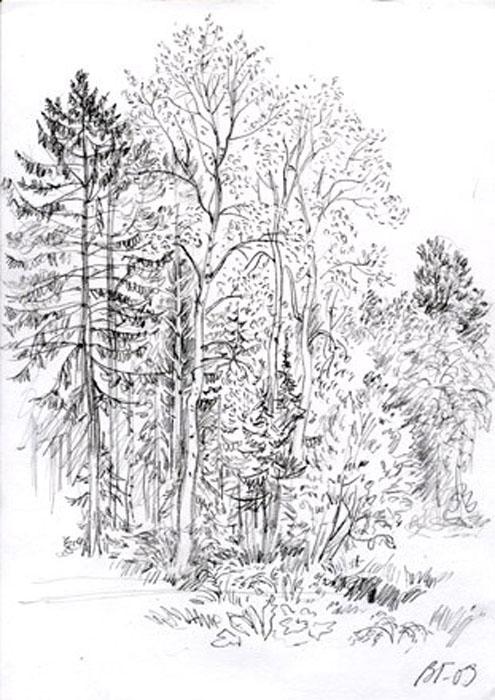 Рисунок карандашом : Графика : Рисунки